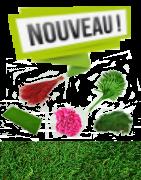 Nouveautés plantes et fleurs stabilisées