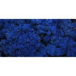 Lichen Stabilisé  Bleu 500 g