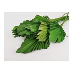 Palm Spear Mini Sèche Verte